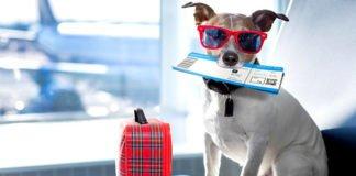 """Названі породи собак, для яких авіаперельоти є небезпечними для життя """" - today.ua"""