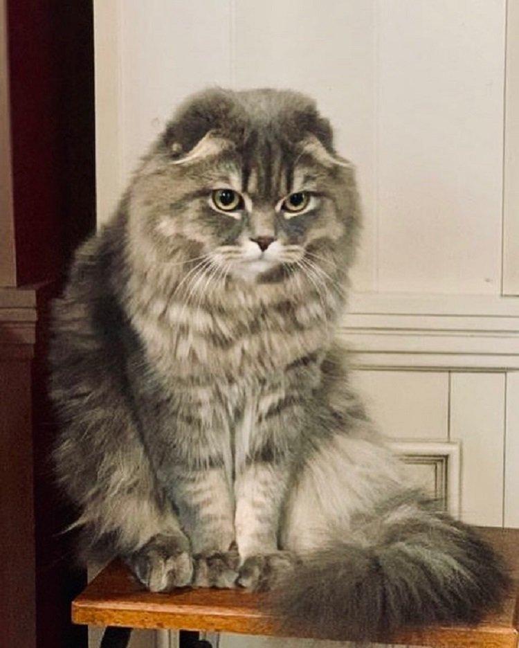 Елена Зеленская показала своего грустного кота-красавца, который не любит фейки