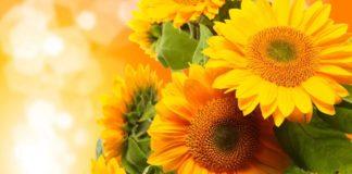 Праздник 23 августа: в день святого Лаврентия Римского обязательно умойтесь утренней росой - today.ua