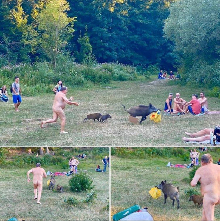 Минутка юмора: в Германии семейка диких кабанов утащила сумку у отдыхающего на пляже