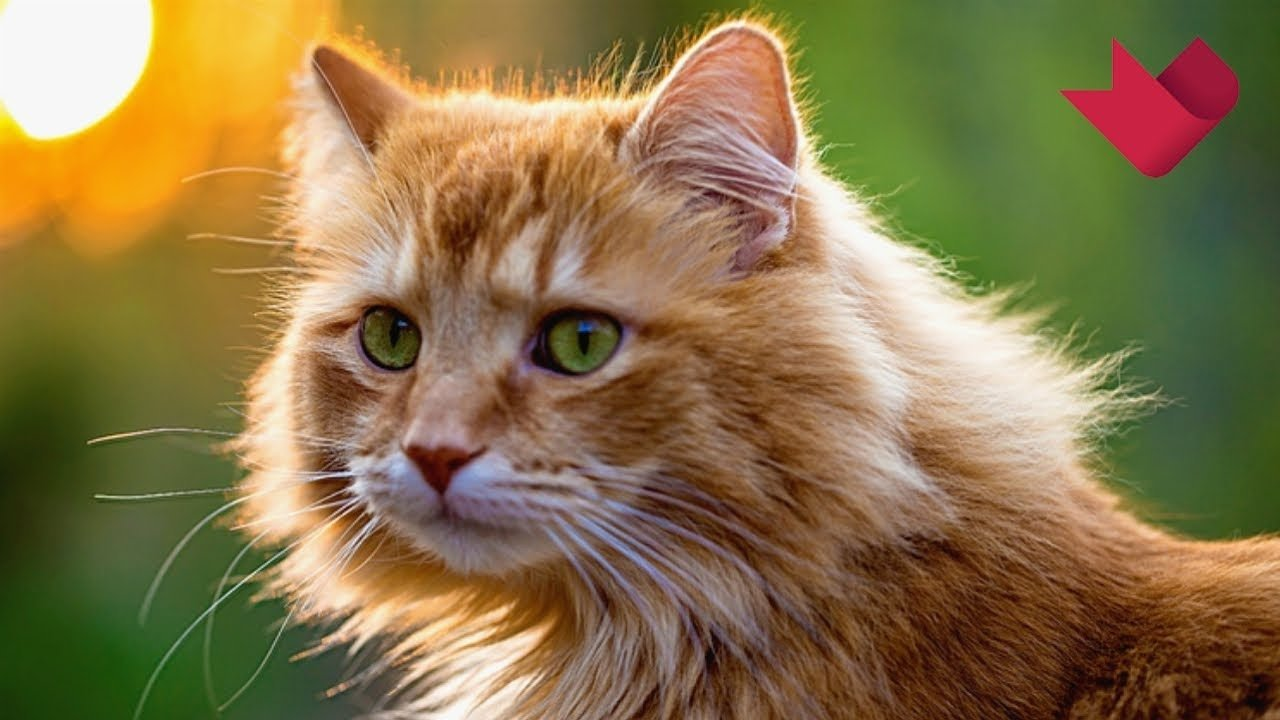 8 августа - Всемирный день кошек: ТОП-8 интересных фактов о пушистых питомцах