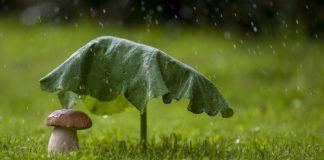 """В Україні різко похолодає: атмосферний фронт принесе дощі і зниження температури до +19"""" - today.ua"""
