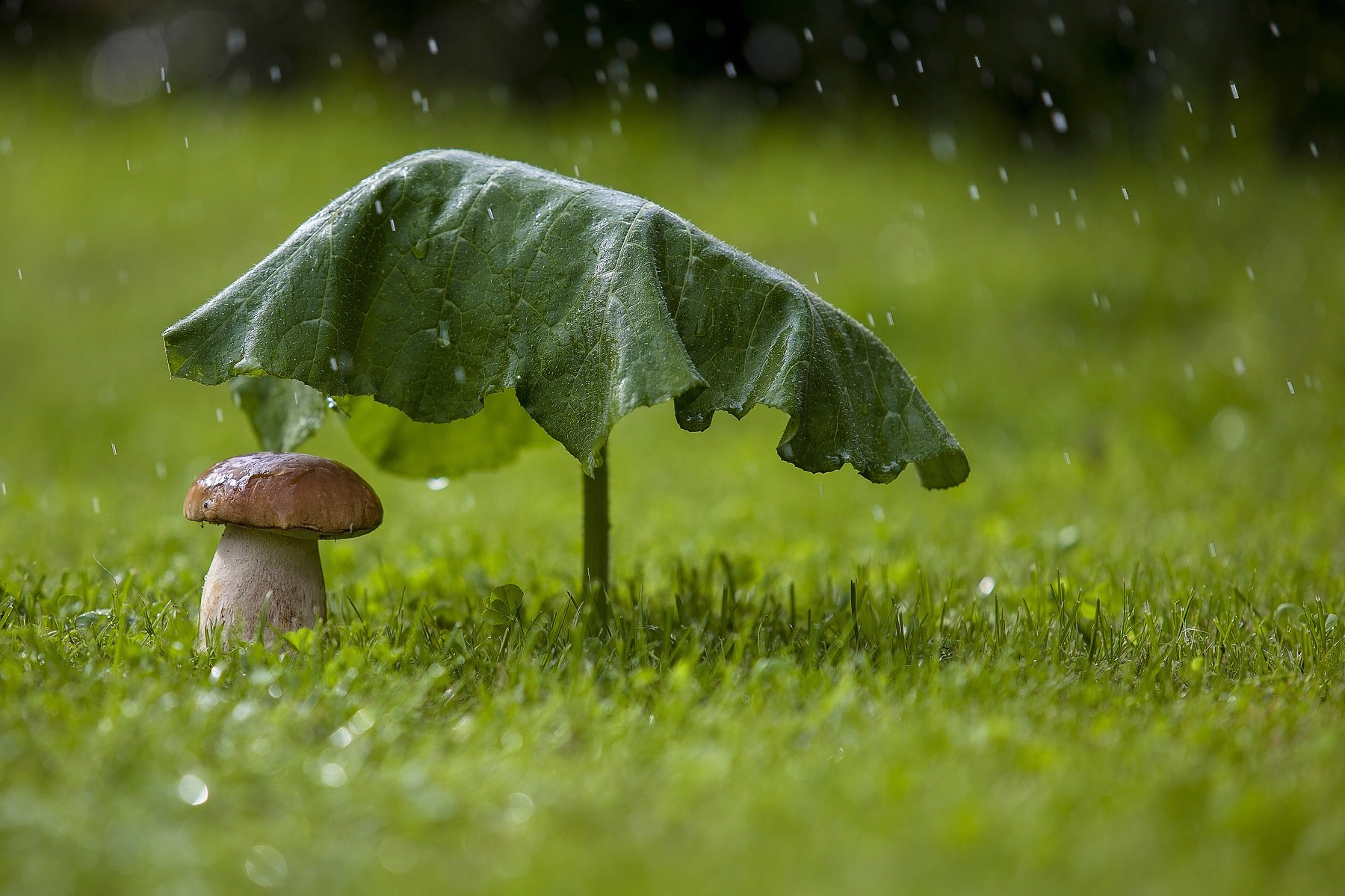 В Україні різко похолодає: атмосферний фронт принесе дощі і зниження температури до +19