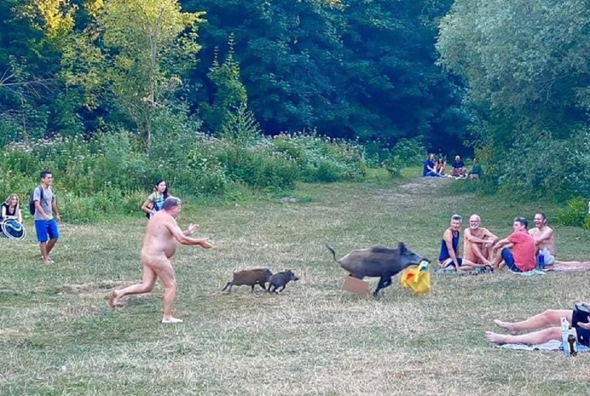 Хвилинка гумору: в Німеччині сімейка диких кабанів потягла сумку у відпочиваючого на пляжі