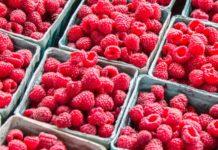 Когда в Украине подешевеет малина: цены на ягоды зашкаливают в разгар сезона - today.ua