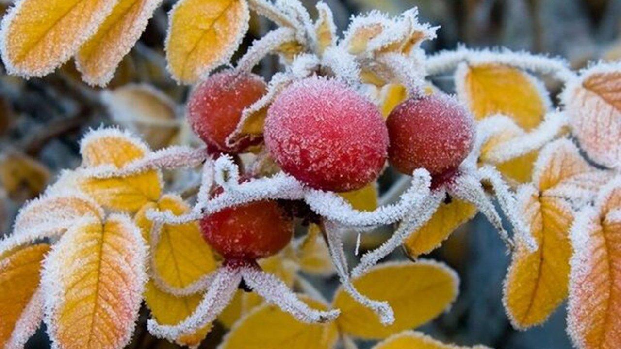 Осень 2020 будет холодной и морозной: прогноз погоды от Укргидрометцентра