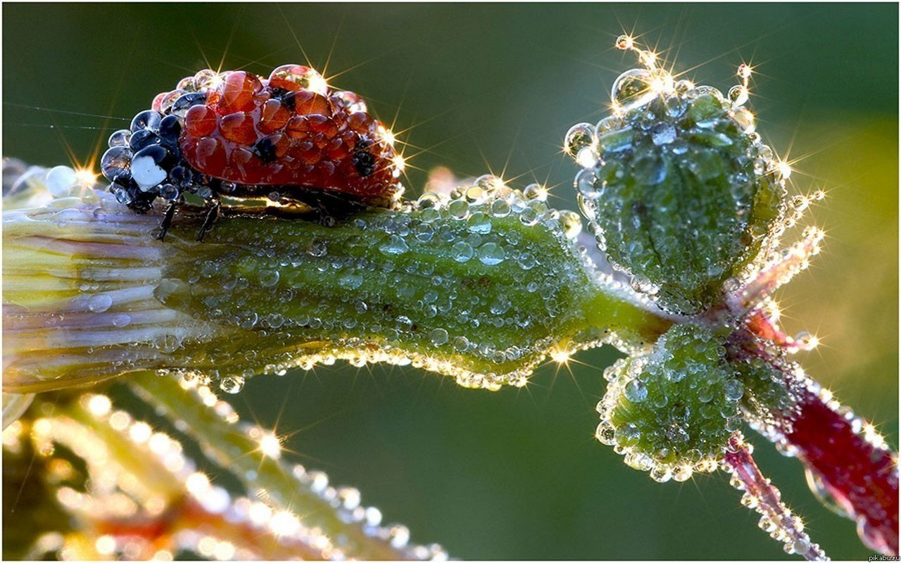 Праздник 23 августа: в день святого Лаврентия Римского обязательно умойтесь утренней росой