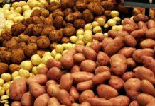 В Украине подорожает картофель: предупреждение экономического эксперта - today.ua