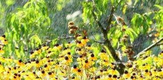 """Дожди и грозы продлятся недолго: синоптики назвали дату, когда в Украину вернется жара"""" - today.ua"""