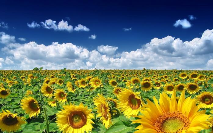 Погода в Украине на День независимости: синоптики назвали регионы, где спадет жара и вернутся дожди  - today.ua