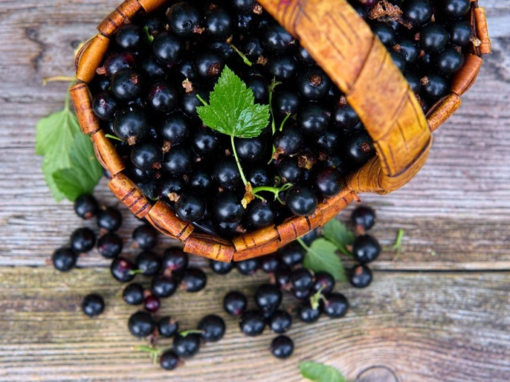 У чому користь білої, чорної і червоної смородини: унікальні властивості ягоди від усіх недуг