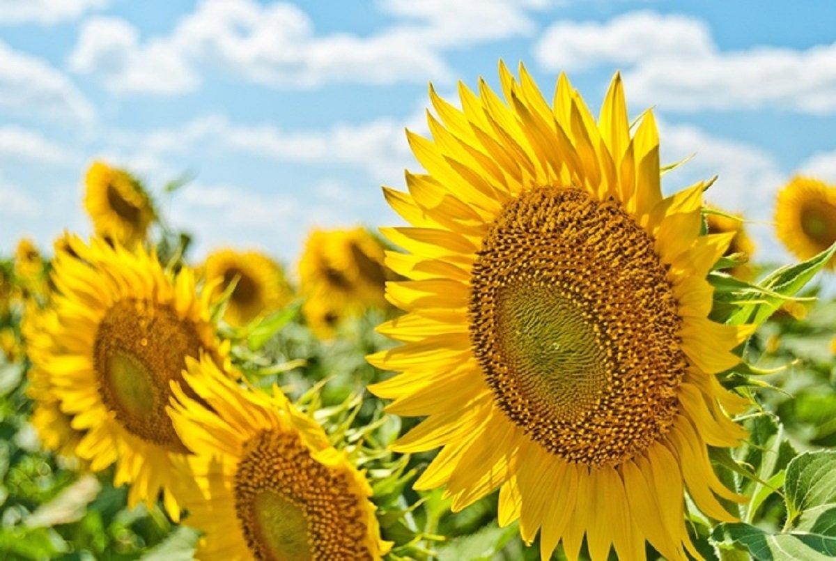 Скільки триватиме серпнева спека: прогноз погоди від Наталки Діденко