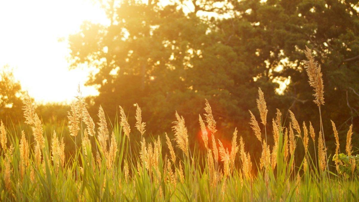 Свято 7 серпня: народні прикмети і традиції в день святої Анни - today.ua