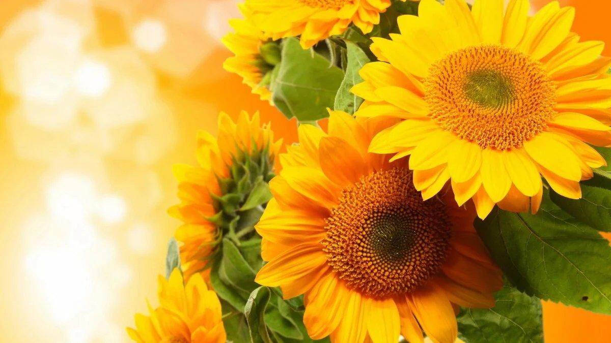 Праздник 5 августа: в Трофимов день нужно встать пораньше, иначе счастья не будет - today.ua