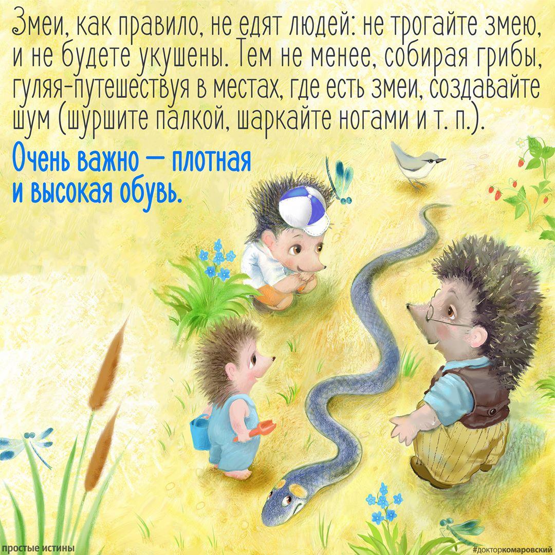 Поради доктора Комаровського: як захиститися від укусу отруйної змії