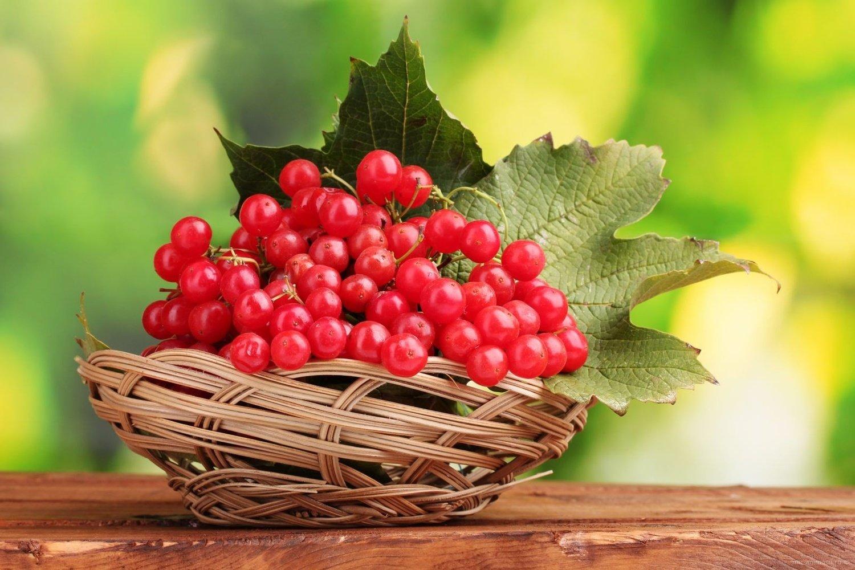 Свято 11 серпня: чому в цей день потрібно готувати страви з калини і вмиватися відваром з калинового листя