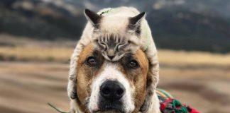 """Ученые нашли, как измерить степень любви кошек и собак к своим хозяевам: угадайте, кто любит больше"""" - today.ua"""