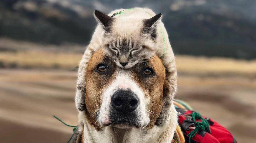 Ученые нашли, как измерить степень любви кошек и собак к своим хозяевам: угадайте, кто любит больше - today.ua