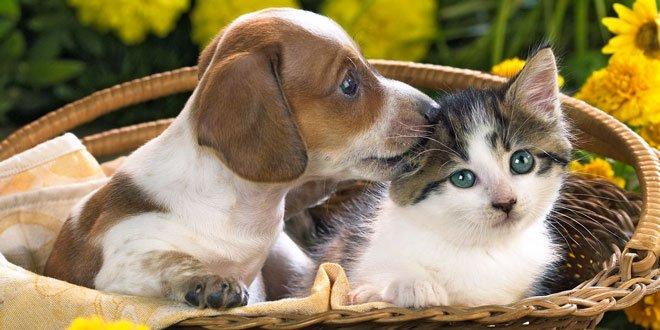 Ученые нашли, как измерить степень любви кошек и собак к своим хозяевам: угадайте, кто любит больше