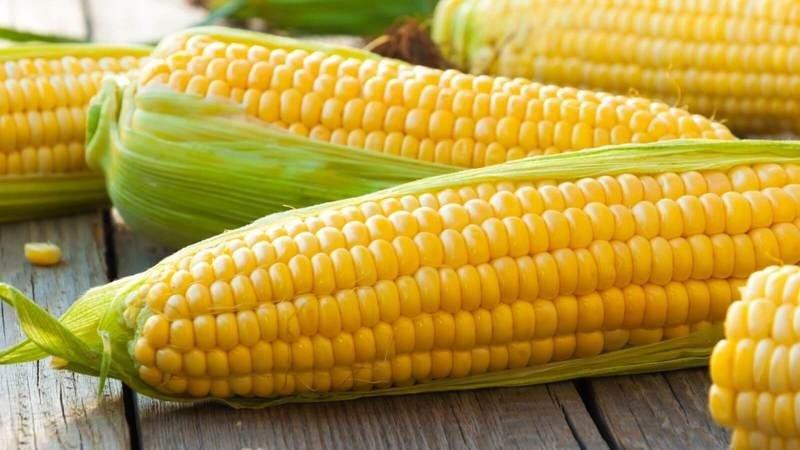 Кукуруза может быть вредной для здоровья: кому лучше исключить из рациона - today.ua