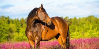 """Праздник 31 августа: почему на Флора и Лавра чтили лошадей и что запрещено делать в этот день"""" - today.ua"""