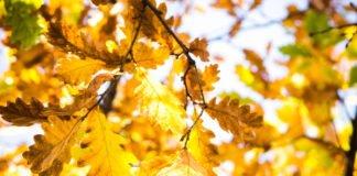 """Спека у вересні і дощі з заморозками в жовтні: синоптики розповіли про сюрпризи погоди цієї осені"""" - today.ua"""