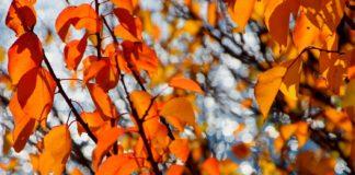 """Україна чекає теплий вересень і аномально холодний жовтень: синоптики зробили прогноз на майбутню осінь"""" - today.ua"""