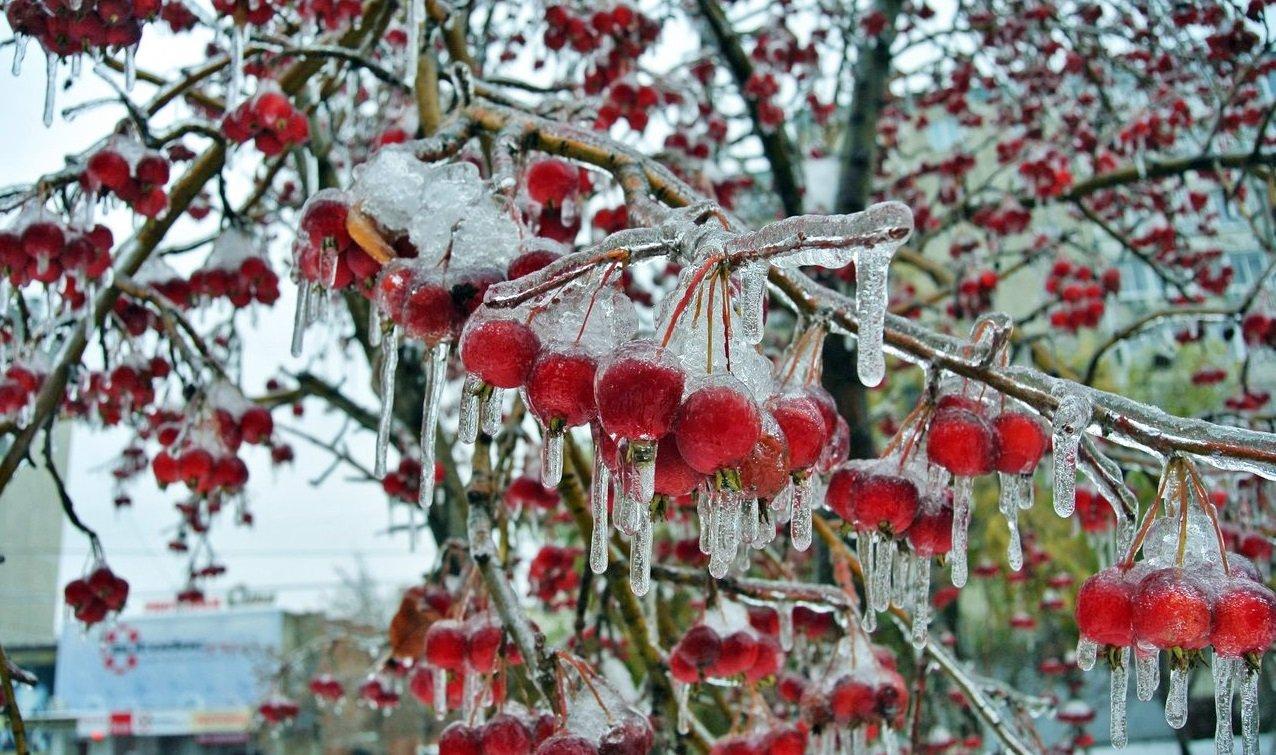 Зима начнется уже в октябре: прогноз погоды Леонида Горбаня для Украины