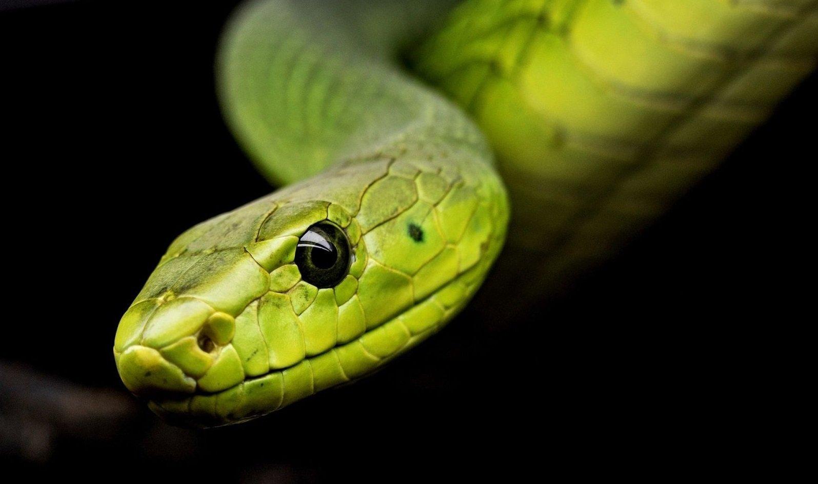 Свято 25 вересня: в день Автонома уважно стежили за зміями