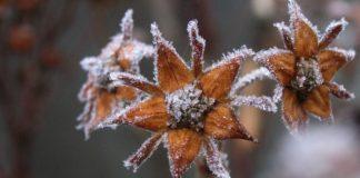 Зима почнеться вже в жовтні: прогноз погоди Леоніда Горбаня для України - today.ua