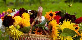 Свято 25 вересня: в день Автонома уважно стежили за зміями - today.ua