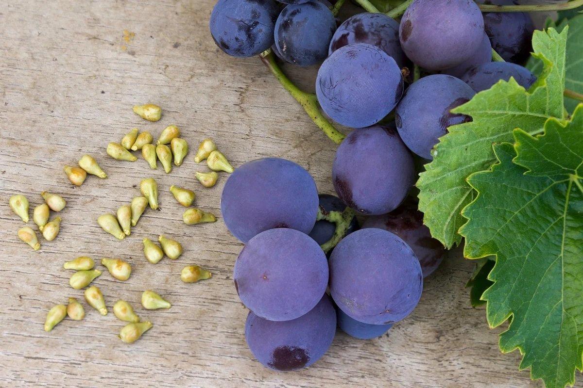 Чи можна їсти виноград з кісточками: думка лікарів