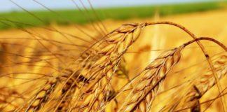 """Праздник 10 сентября: для чего на Анну Пророчицу прятали в домах пшеничные колоски"""" - today.ua"""