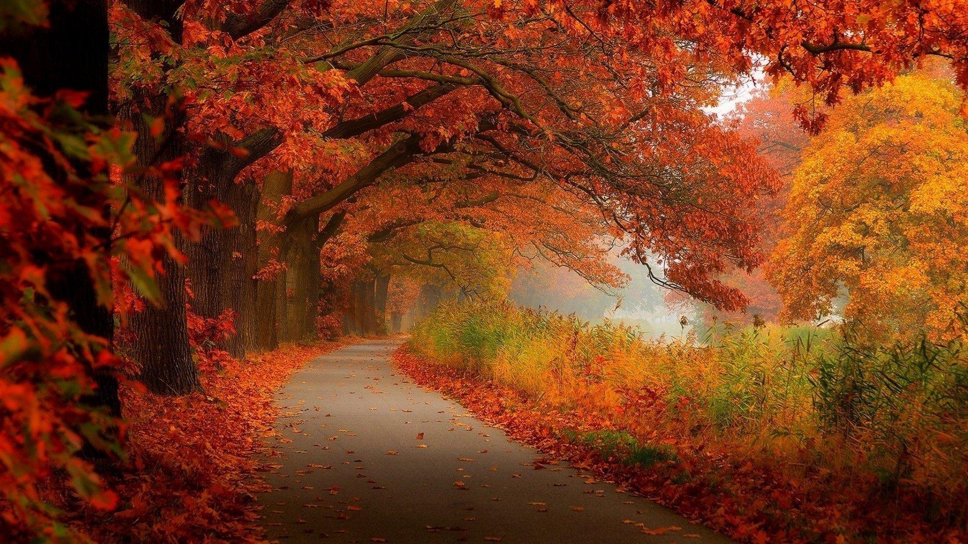 Праздник 6 сентября: в день святого Евтихия запрещено уходить далеко от дома