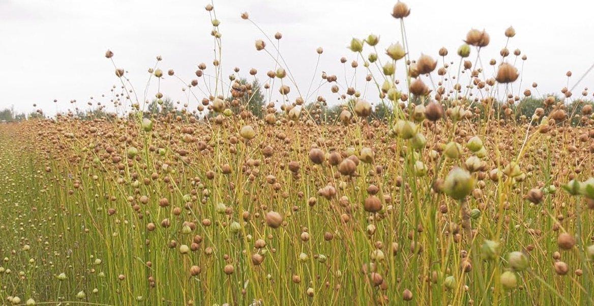 Праздник 3 сентября: день памяти святого Фаддея отмечали на полях