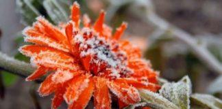 """В Україну наближається похолодання і перші заморозки: синоптики назвали дату"""" - today.ua"""