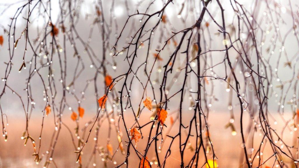 Різке похолодання, дощі та грози: синоптики розповіли про погоду на другу половину вересня