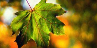 """Похолодання вже не за горами: синоптики оновили прогноз на перший тиждень осені"""" - today.ua"""