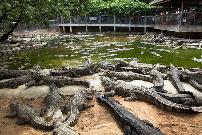 Українців годуватимуть м'ясом крокодилів: угода про поставки з ПАР вже на порядку денному