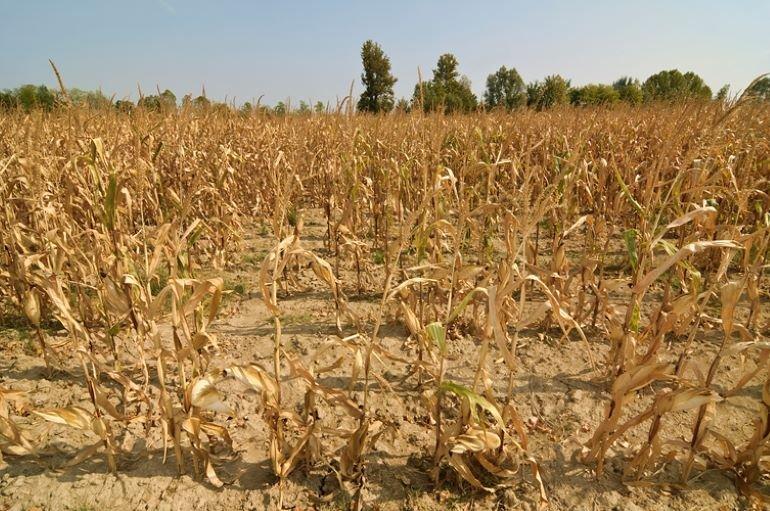 Аграрники б'ють на сполох: вже через рік в Україні може настати голод