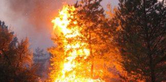 """На Донбасі під час гасіння пожежі загадково зникли два українських бійця: що кажуть у штабі ООС"""" - today.ua"""