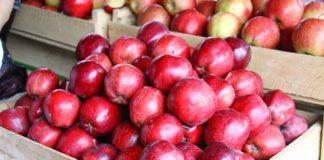 Пора запасатися на зиму: в Україні різко подешевшали яблука - today.ua