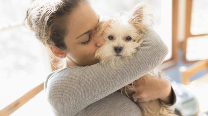 """Вчені з'ясували, як собаки реагують на фразу """"Я тебе люблю"""""""