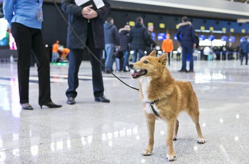 Експерти назвали породу собак, яка розпізнає хворих на коронавірус