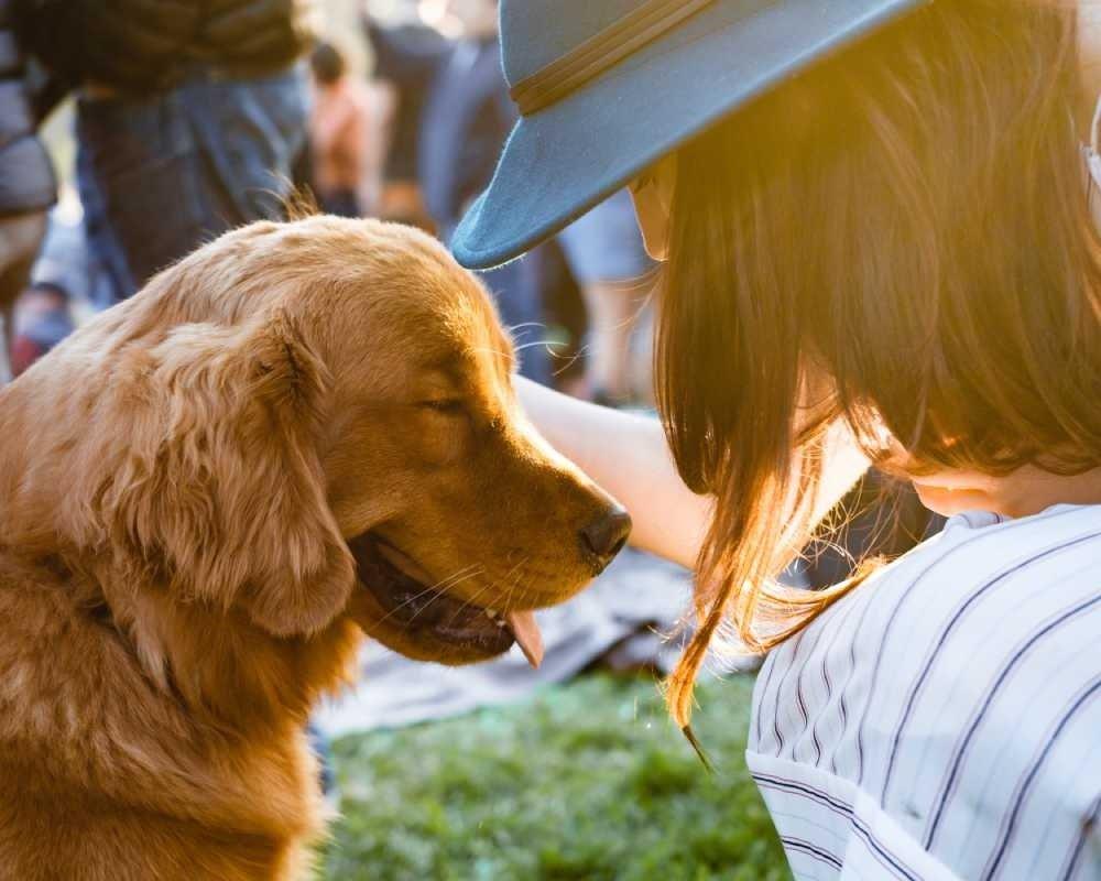 Чотири типи людей, на яких собаки ніколи не нападають, - зоопсихологи