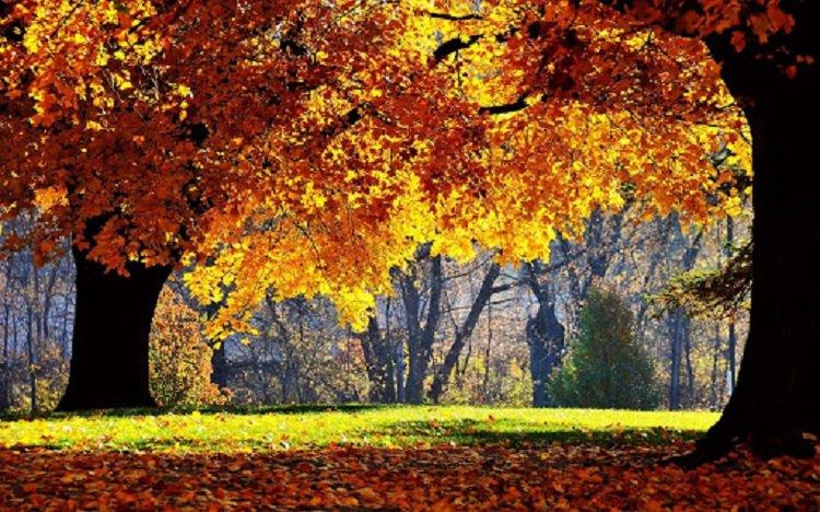 Праздник 17 октября: почему в Ерофеев день опасно ходить в лес