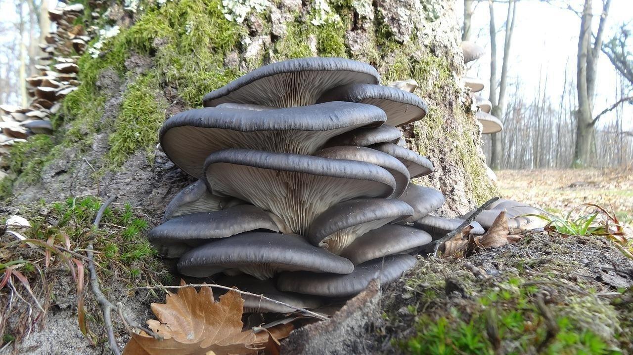 Смачні гливи до зимових свят: поради по засолюванні грибів