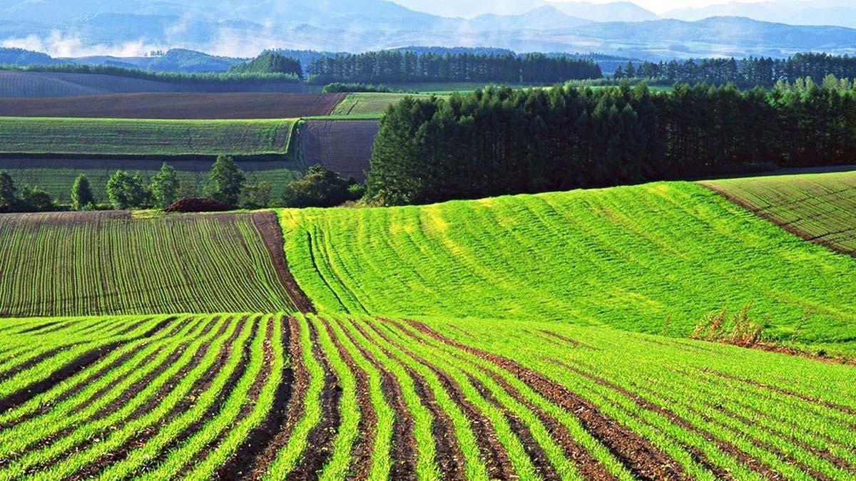 Зеленський підписав доленосний закон: землі України більше не належать державі