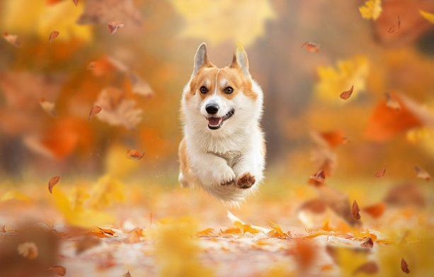 Собака може принести в будинок коронавірус після прогулянки - думка фахівця