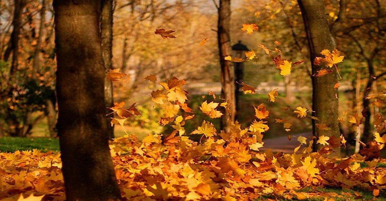 Праздник 22 октября: на Иакова варят целебную кашу